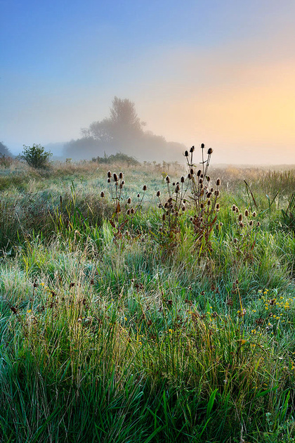 Morning glow, Waltham Brooks.